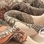 ผ้าพันคอแฟชั่นลายสวยน่ารัก Kawaii : สีชมพู CK0241 thumbnail 4