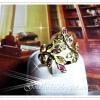 แหวนใบไม้นพเก้า และใบไม้เพชร / gold plated 1microns/white gold plated