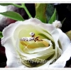 แหวนเพชรเล็ก gold plated 5microns/white gold plated
