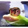 แหวนหยินหยาง/gold plated 5microns/white gold plated