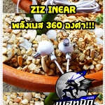 ZIZ 360 Degree พลังBass 360องศา!!