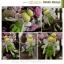 แพทเทิร์นตุ๊กตาถักทิงเกอร์เบลล์ Tinkerbell thumbnail 2