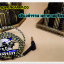 Baroque INEAR MOD With MIC (BLACK) thumbnail 4