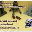 อสงไขย Wood 42 Best Balance Version (MMCX) thumbnail 2