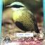 ►หมอพิชญ์ Biobeam◄ COMA 6713 หนังสือเรียนคอร์ส Coma สรุปเนื้อหาวิชาชีววิทยา ม.ปลายครบทุกเรื่อง เพื่อเตรียมสอบเข้ามหาวิทยาลัย สอบเอ็นทรานซ์ ในหนังสือจดครบเกือบทั้งเล่ม จดด้วยปากกาสีและดินสอ จดละเอียดมาก มีวิธีทำการโจทย์และสูตรลัดของหมอพิชญ์ไบโอบีม หนังสือเ thumbnail 1