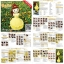 แพทเทิร์นตุ๊กตาถักเจ้าหญิงเบลล์ (Amigurumi Belle Pattern) thumbnail 5