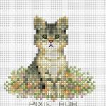 ลูกแมวแสนรัก PIXIE BOB