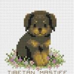 ลูกหมาแสนรัก TIBETAN MASTIFF