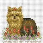 ลูกหมาแสนรัก YORKSHIRE TERRIER