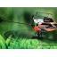 WL- V933 6ch 3D เฮลิคอปเตอร์ thumbnail 3