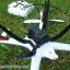 TARANTORA X6 ฺ BIG DRONE camera 5.0p thumbnail 3