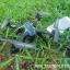 CT1000+VR BOX fpv racing drone thumbnail 2