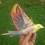 E-Bird นกบังคับวิทยุ thumbnail 2