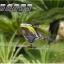 Walkera V450D03 6ch 3D thumbnail 3