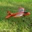 KITTY rc plane thumbnail 11