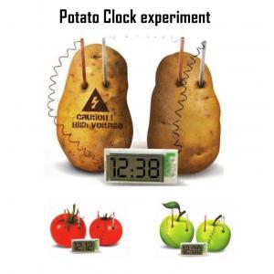 Potato Clock experiment การทดลองพลังงานไฟฟ้า จากผลไม้