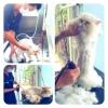 Cat Grooming Service: อัตราค่าบริการ อาบน้ำ - ตัดขน น้องแมว