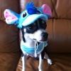 หมวกน้องหมาแฟนซี สติช พร้อมส่ง