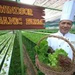ออร์แกนิก (Organic Food)