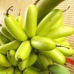 วิธีลดน้ำหนัก แบบกล้วยไข่