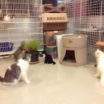 How to Reserve: ขั้นตอนการสำรองที่พักสำหรับน้องแมว