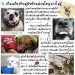 5 เรื่องจริงเกี่ยวกับน้องหมา..ที่คนส่วนใหญ่อาจไม่รู้