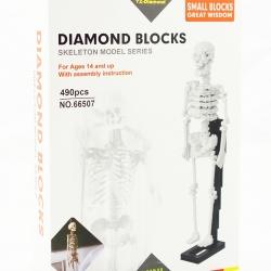 Diamonds Blocks โครงกระดูกมนุษย์ 490ชิ้น