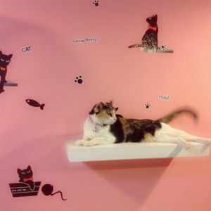มัดจำจองห้องพัก หรือ กรง สำหรับน้องแมว