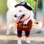 (พร้อมส่ง) เสื้อผ้าสุนัข ชุดแฟนซีโจรสลัด thumbnail 3