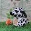 ตุ๊กตาไอ้ตูบ ดัลเมเชี่ยน thumbnail 1