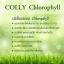 ผลิตภัณฑ์น้องใหม่ Colly Chlorophyll Plus Fiber สารสกัดคลอโรฟิลล์ กลิ่นหอมชาเขียว ล้างสารพิษ ผิวสวยจากภายใน thumbnail 3