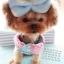 (พร้อมส่ง) ชุดกระโปรงสุนัข ลายจุด ทูโทน ฟ้า-ชมพู thumbnail 3