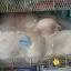 หมอนหลุม Sozzy Baby Pillow พร้อมส่งลาย ช้าง/แกะ/กระต่าย/ม้า thumbnail 2
