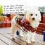 เสื้อเชิ๊ตน้องหมา ลายสก๊อต Paul Frank สีส้ม-เหลือง พร้อมส่ง thumbnail 1
