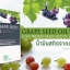 Grape Seed Oil Cold Pressed: 706 mg, น้ำมันองุ่น ชนิดสกัดเย็น thumbnail 1