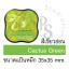 หมึกปั๊มพลาสติก สีเขียวอ่อน Cactus Green thumbnail 1