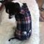เสื้อสุนัขลายสก๊อตสไตล์ผู้ดี พร้อมปลอกคอหูกระต่าย พร้อมส่ง thumbnail 2