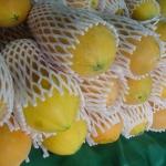 เมล็ดมะละกอฮอลแลนด์/ปักไม้ลาย( 150 เมล็ด)