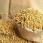 เมล็ดพันธุ์ถั่วเหลือง(100 เมล็ด)