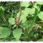 เมล็ดผักโขมเขียว (300 เมล็ด) thumbnail 1