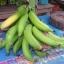 หน่อกล้วยงาช้าง thumbnail 2