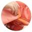 "TB58 กระเป๋าใส่ชุดชั้นใน ""Pastel Underwear Pouch"" thumbnail 11"