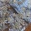 ชุดเดรสเกาหลี พร้อมส่งเดรสผ้าลูกไม้สีพาสเทลทรงกี่เพ้าสไตล์จีน thumbnail 5