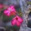 Nikon-H.C Auto 50mm F2 thumbnail 10