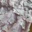 ชุดเดรสเกาหลี พร้อมส่งเดรสผ้าเครปสีชมพูปักผีเสื้อตกแต่งสร้อยคอมุก thumbnail 10