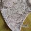 ชุดเดรสเกาหลี พร้อมส่งเดรสผ้าลูกไม้สีชมพูตกแต่งกระดุมสุดหรู thumbnail 15