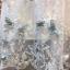 ชุดเดรสเกาหลี พร้อมส่งlong dress ผ้ามุ้งแขน 5 ส่วน thumbnail 12