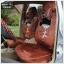 ชุดคลุมเบาะรถยนต์ลาย MeiTu (สีน้ำตาล) thumbnail 1
