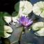 YASHICA YASHINON 45MM. F1.9 MODIFLY NEX MOUNT thumbnail 8