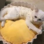 ที่นอนคัพเค็กแสนหวานสำหรับสัตว์เลี้ยง